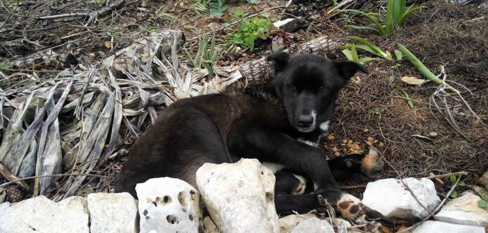 Monopoli: cane investito sulla Gravina, soccorso dai Vigili